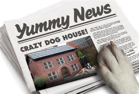 crazy dog houses crazy dog house yummypets