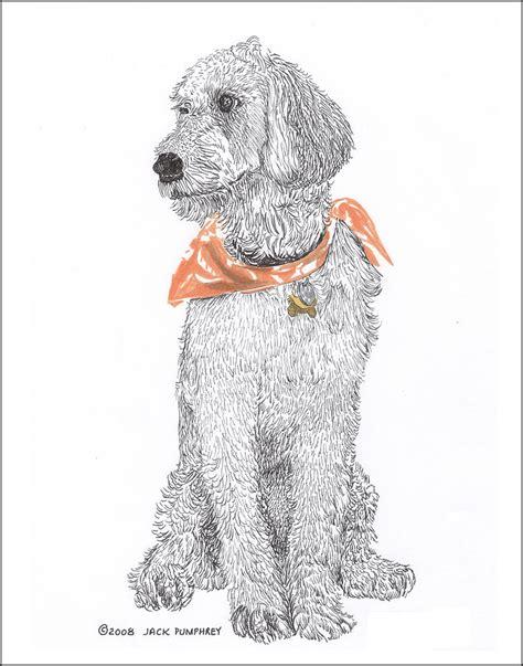 goldendoodle drawing trash talking golden doodle drawing by pumphrey