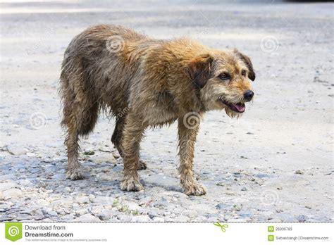 abandoned puppies abandoned stock photos image 26936783
