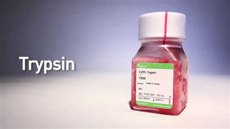 Trypsin by gibco® - YouTube