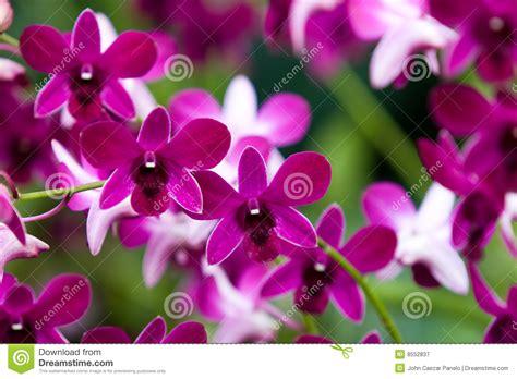 imagenes de orquideas muy bonitas orqu 237 deas hermosas fotograf 237 a de archivo libre de regal 237 as