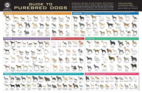 akc breeds akc breeds poster rolled shipped in a akc shop