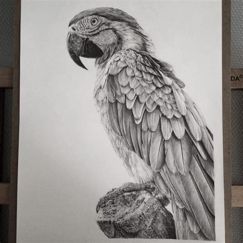 Kaos 3d Burung Bird Fold Putih Photorealistic Drawings From Cube