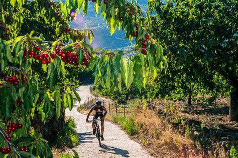 collina dei ciliegi testo la collina dei ciliegi nella valle jerte latitudes