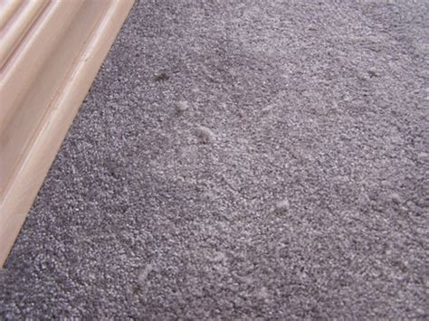 5 expert solutions to carpet problems terrys steam cleaning