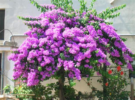 foto fiore viola pianta fiori viola fiori idea immagine