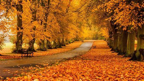 for fall tgif thank god it s fall