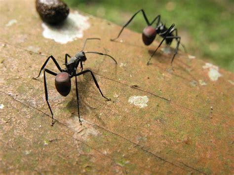 formiche in casa cosa fare come combattere le formiche naturalmente giordano arreda