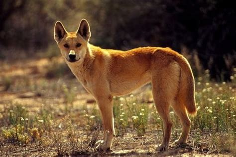 cute beautiful  surprisingly dangerous animals