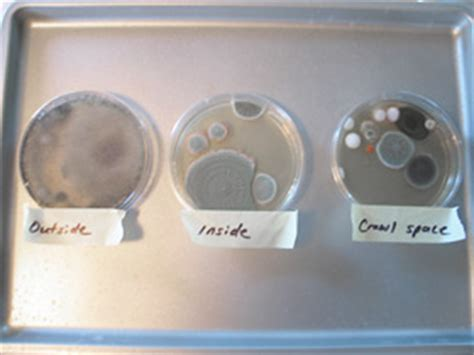 Home Mold Test by Mold In House Check House For Molds