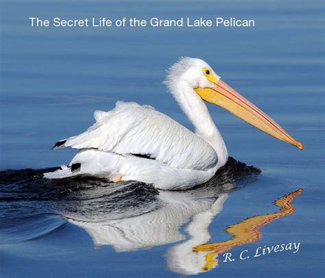 pelican pattern trading the secret life of the grand lake pelican blurb books
