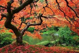 just cool pics the most beautiful trees ever