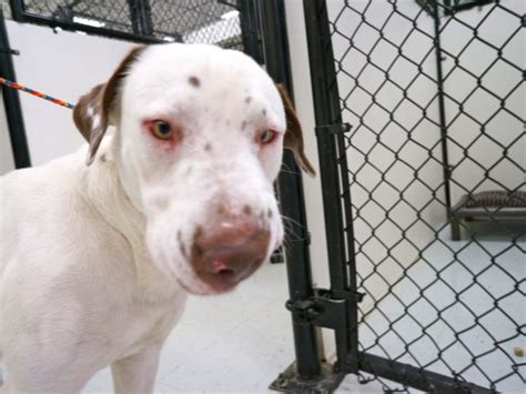 give away puppies for free animal services giving away pets for free bradenton fl patch