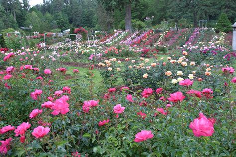 rose gardening file rosetestgardenportland jpg