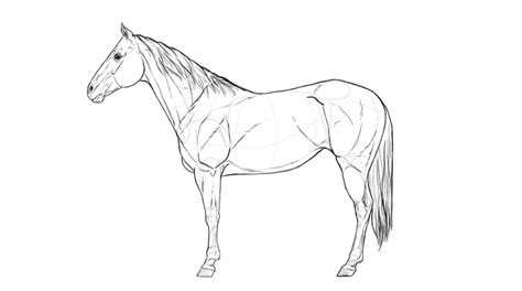 Galerry horse anatomy coloring page
