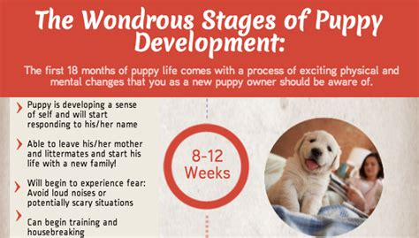 puppy development stages the wondrous stages of puppy development infographic visualistan