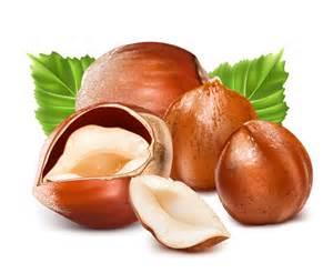 hazelnut design elements vector vector food free download