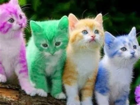 colorful cats found the cutest cr 252 e all theses kittens must