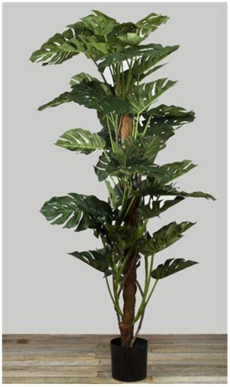 Philo Monstera artificial plants nsw silk trees and plants supplier of artificial plants aus