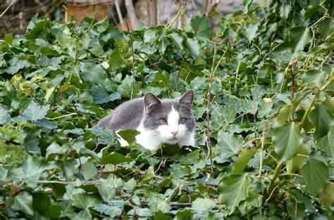 dispatch  metz cats  context