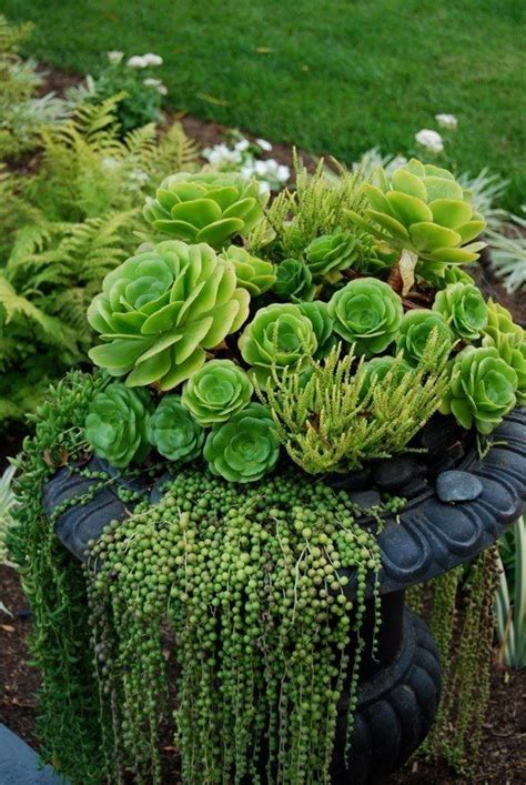 nice collection of succulents the cascading ones are know to me over a lifespan of 67 years as