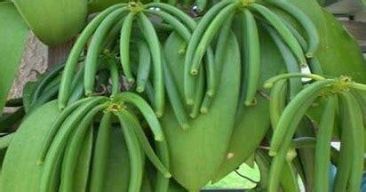 mengenal contoh tanaman generatif  vegetatif tanaman hias