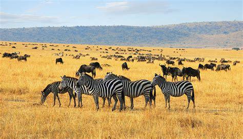 Syari Kanita safari ein etwas anderes urlaubsabenteuer