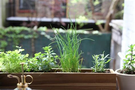 Window Sill Herbs Designs Diy Shade Tolerant Herbs To Grow In Your Apartment Gardenista