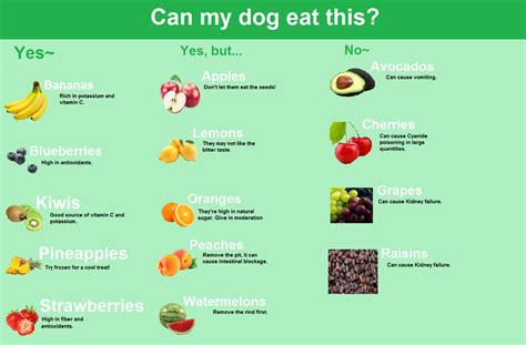 what to serve with dogs what can your eat fruit by blizzardhaze on deviantart