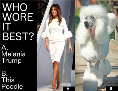 Who Wore It Best by Who Wore It Best Melania Or This Poodle Poodles