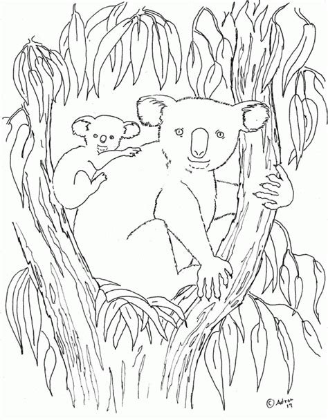eucalyptus tree coloring page mommy koala and baby koala on an eucalyptus tree coloring