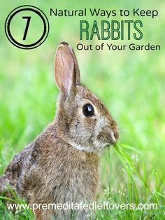 How To Get Rid Of Bunnies In Backyard by 7 Safe Ways To Get Rid Of Japanese Beetles In The Garden