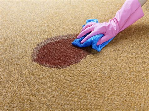 rug cleaners reviews blood stain on carpet carpet cleaner reviews