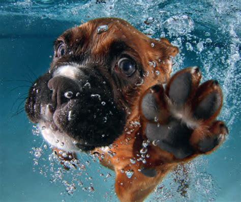 puppies underwater underwater puppies book cool sh t you can buy find cool things to buy