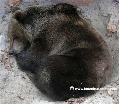 imagenes de animales que hibernan animales que hibernan