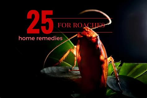 home remedies to get rid of roaches s guide
