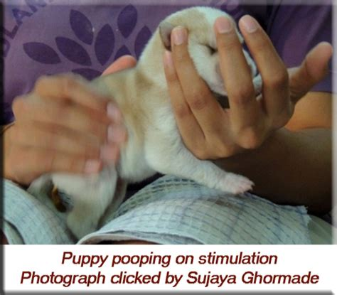 newborn puppy constantly rehabber s den neonate care rearing new born puppies