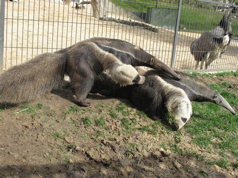 imagenes de animales zoo los animales de nuestra vida 191 c 243 mo soportan el calor los