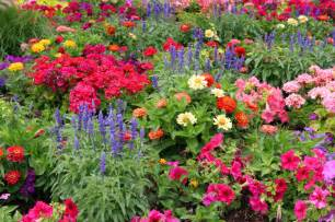 Flower In Garden Pictures Benefits Of Starting Your Own Garden Perfume Genius
