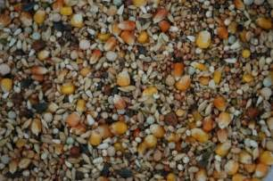 grains fuel and pigeon racing suggested rations