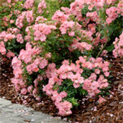 Amenagement Jardin En Pente 2646 by Fleurir Un Talus Am 233 Nagement De Jardin
