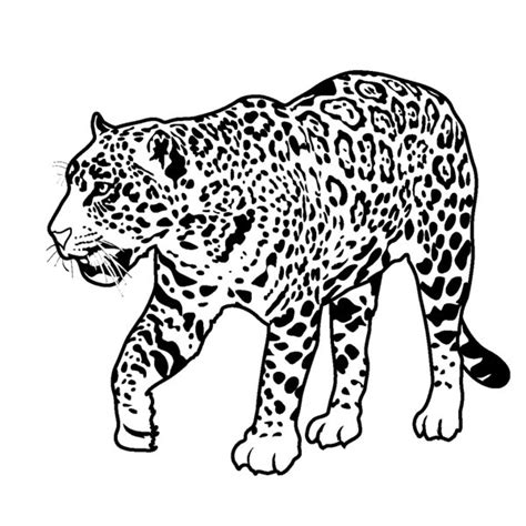 Coloring Pages Of Rainforest Animals Bestofcoloring Com Pictures Of Rainforest Animals To Color
