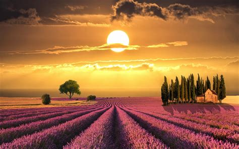 tuscany wonderful sunset  lavender fields italy hd