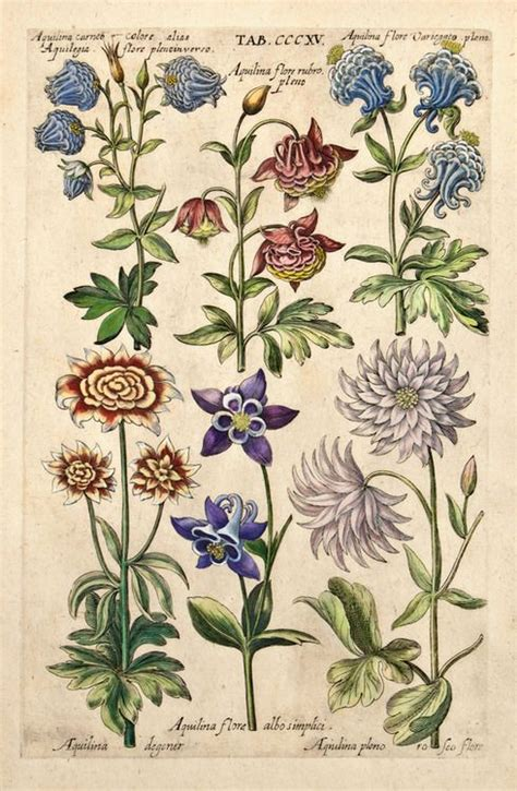 Seeds Of The Utopia Book I 17 best images about botanical aquilegia on