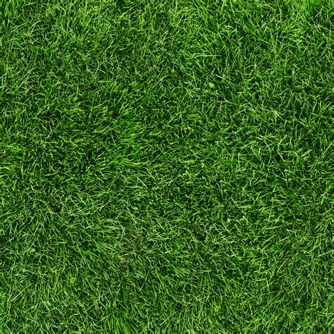 image pattern grass wee wee couture real grass sorbco llc
