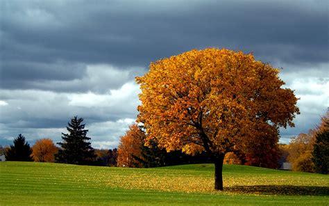 beautiful fall 4k hd desktop beautiful autumn pictures hd desktop wallpapers 4k hd