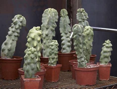 come curare le piante da appartamento piante grasse da appartamento piante appartamento