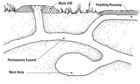 Moles Living With Wildlife Washington Department Of House On The Prairie Coloring Pages
