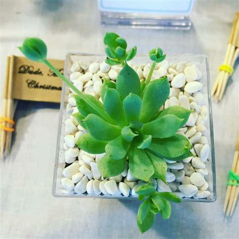 pflanzen ideen sukkulenten im glas im blickfang kreative deko ideen mit