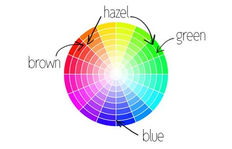 eye color wheel how to the best eye shadow shades for your eye color